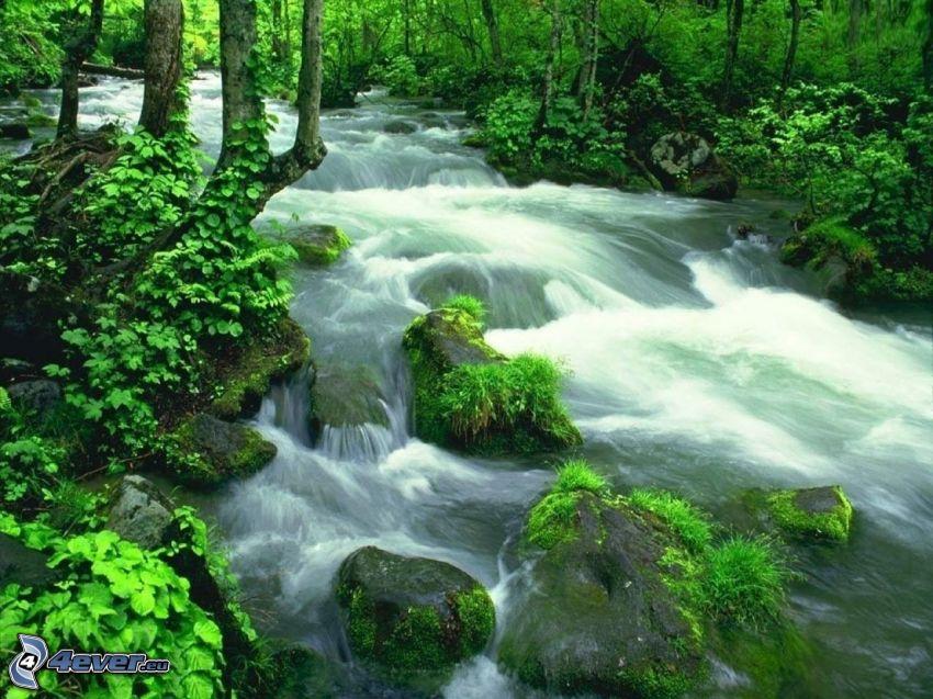arroyo en el bosque, verde