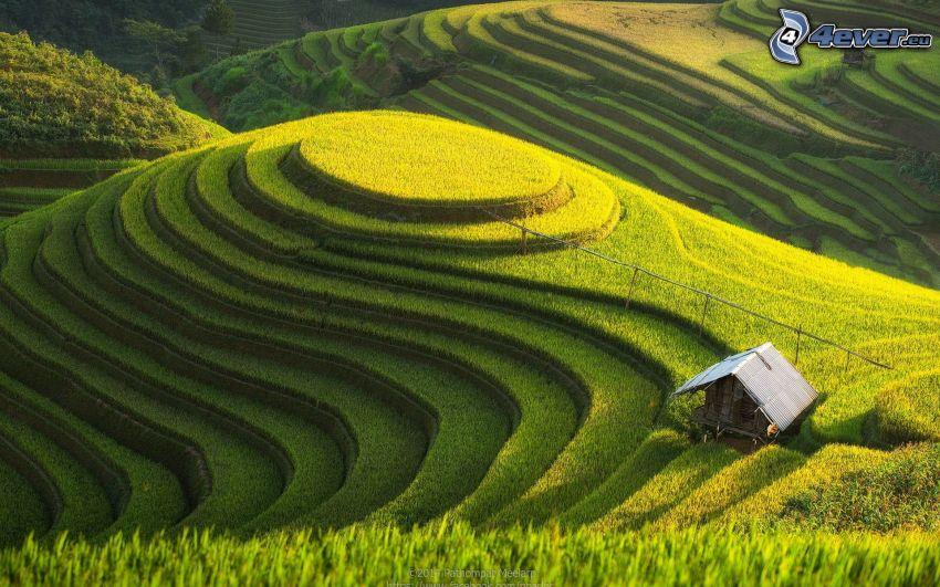 Arrozales en Vietnam, cabaña