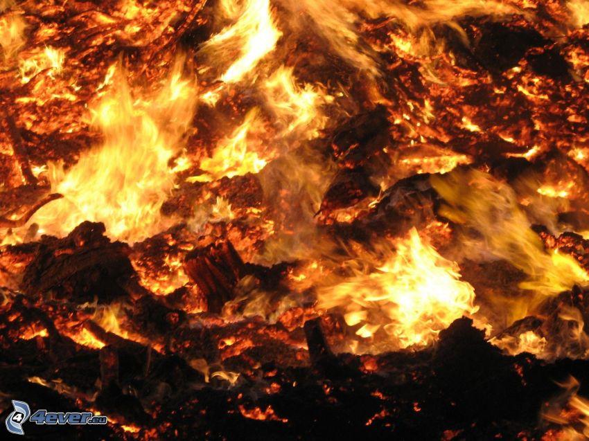 ascuas, fuego