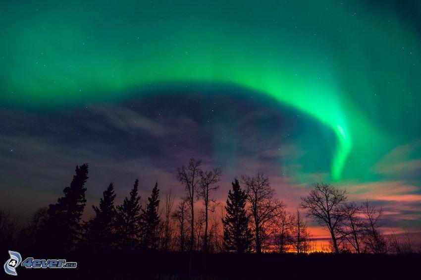 aurora polar, siluetas de los árboles