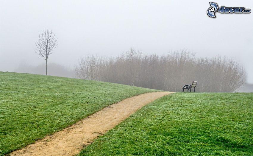 banco, acera, niebla, parque