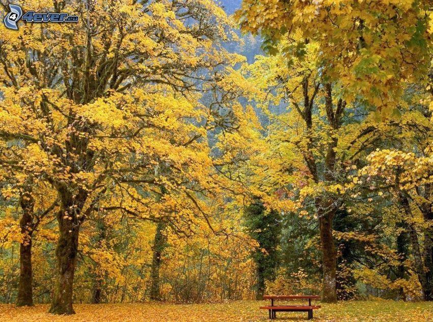banco en el parque, árboles amarillos, hojas caídas