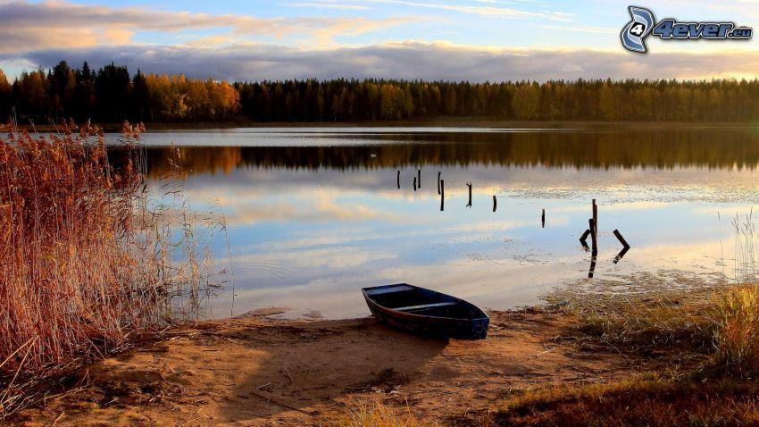 barco de madera, orilla, lago, bosque