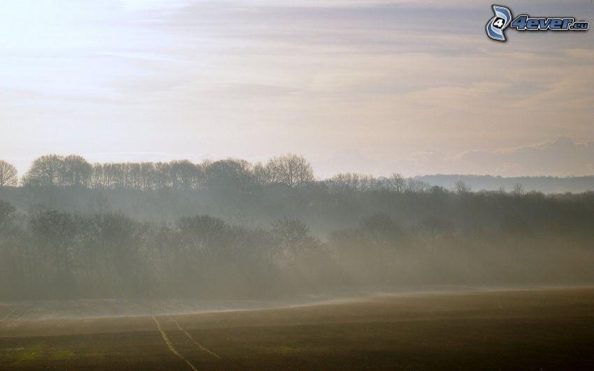 bosque, campo, niebla baja