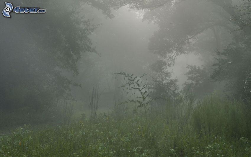 bosque, niebla, hierba
