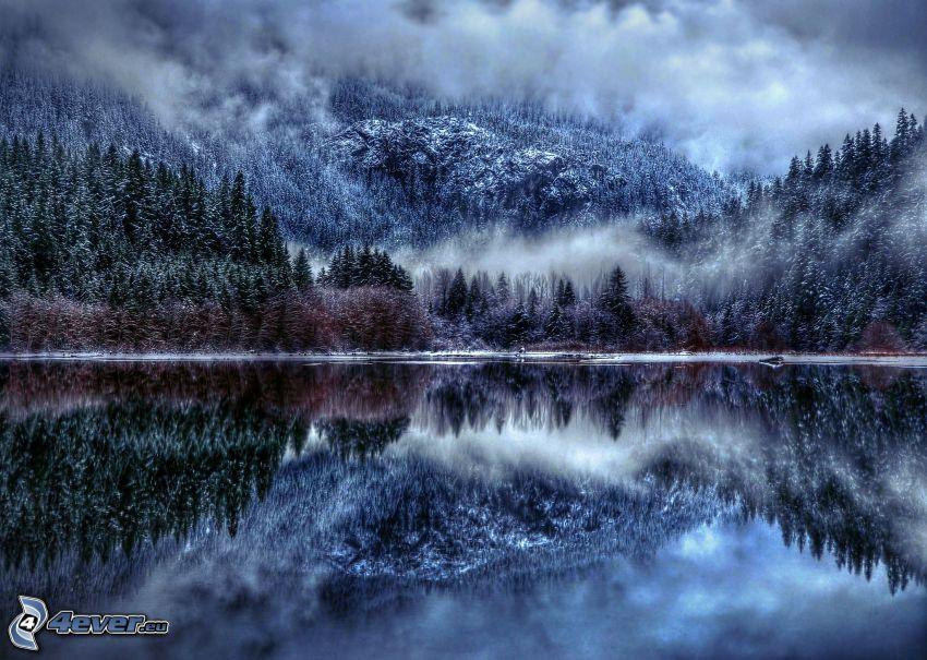 bosque, niebla, lago, reflejo