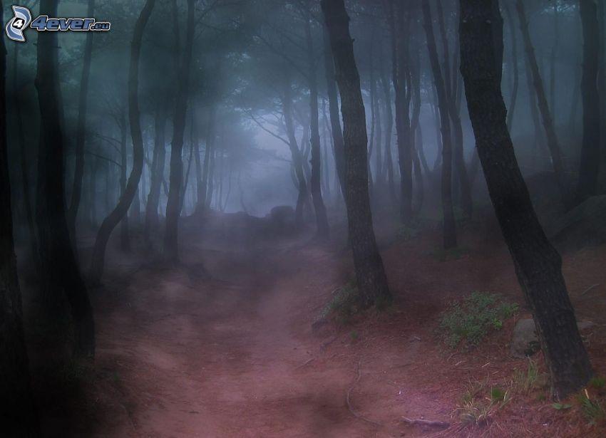 bosque, niebla