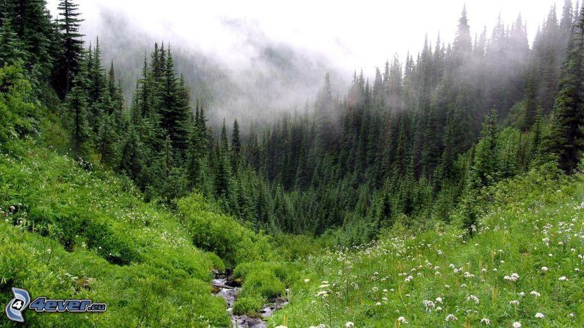 bosque, prado, niebla, riachuelo