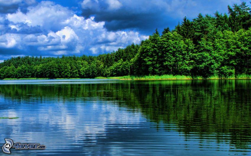 bosque, río, nubes