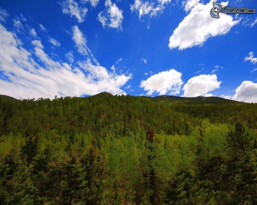 bosque, sierra, nubes