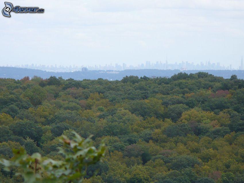 bosque, silueta de la ciudad