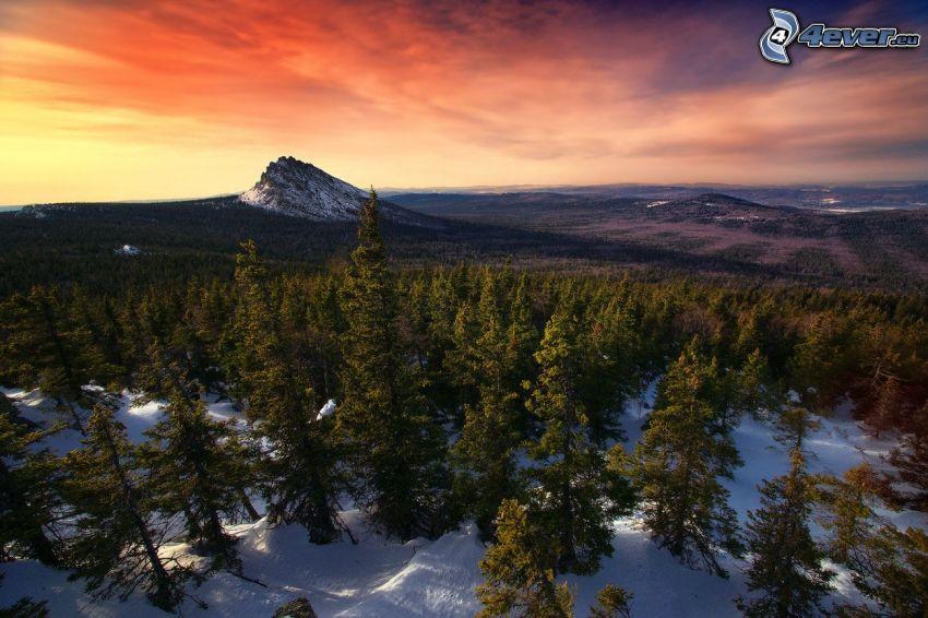 bosque de coníferas nevado, montaña nevada, puesta de sol anaranjada