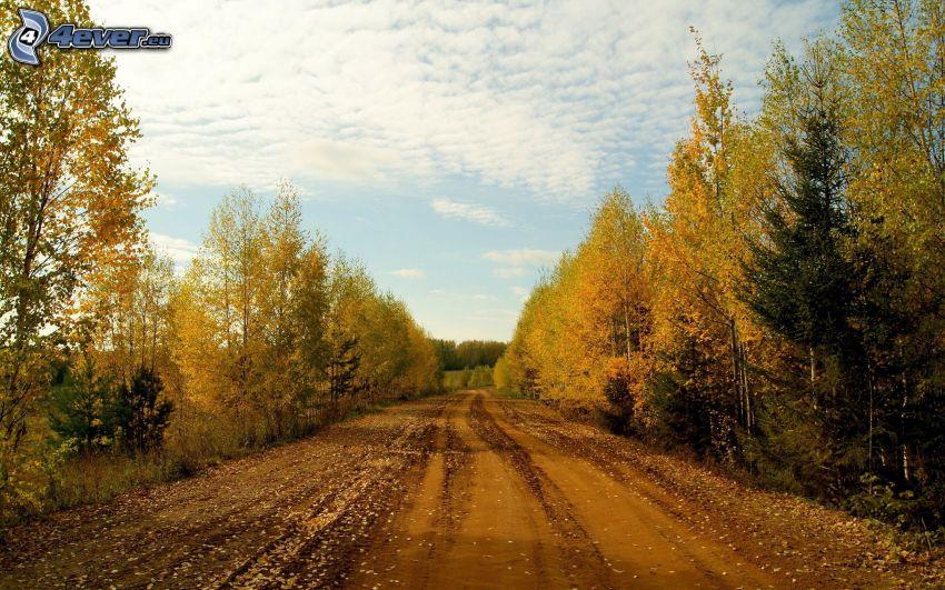 bosque de otoño, camino de campo