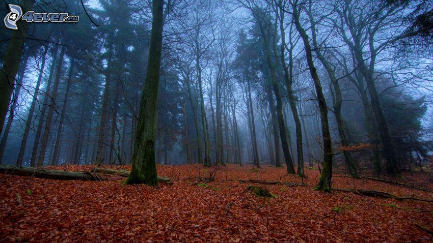 bosque de otoño, hojas secas, atardecer