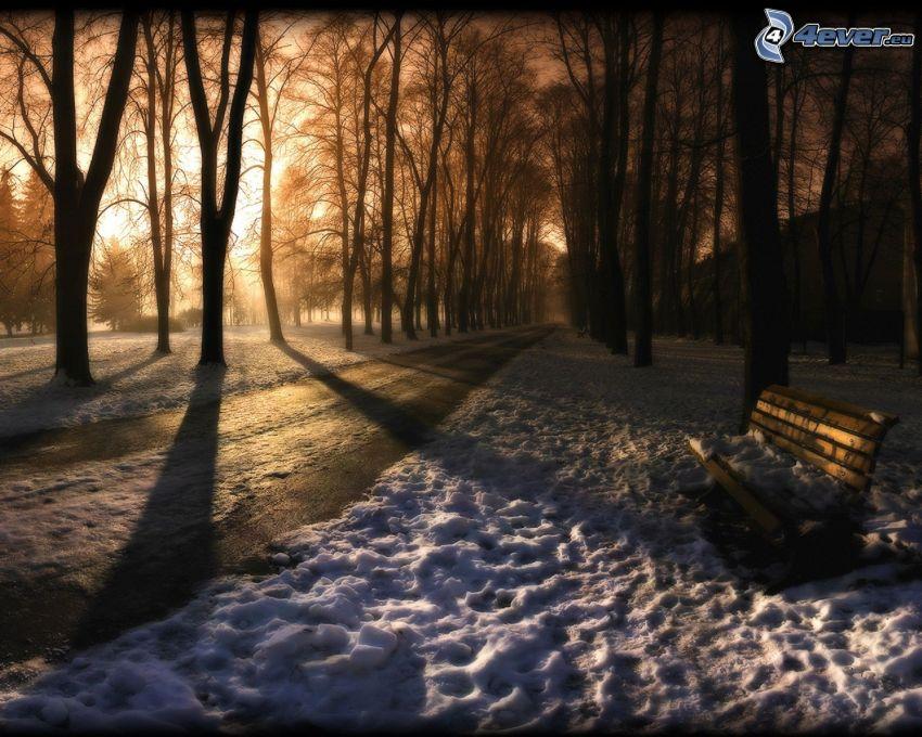 bosque nevado, banco