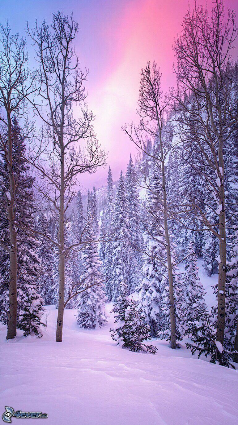 bosque nevado, cielo púrpura