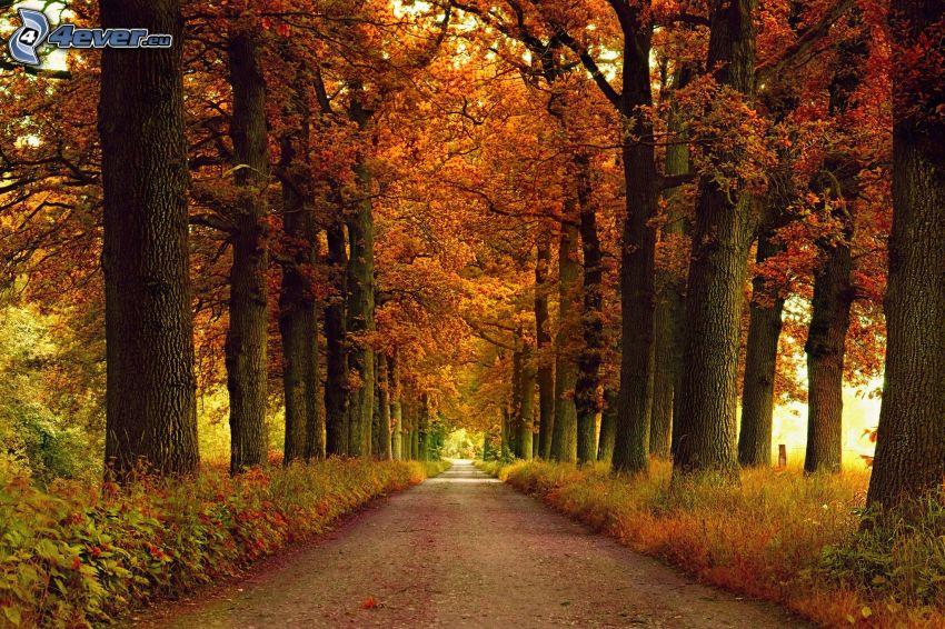 bosque rojo del otoño, camino por el bosque