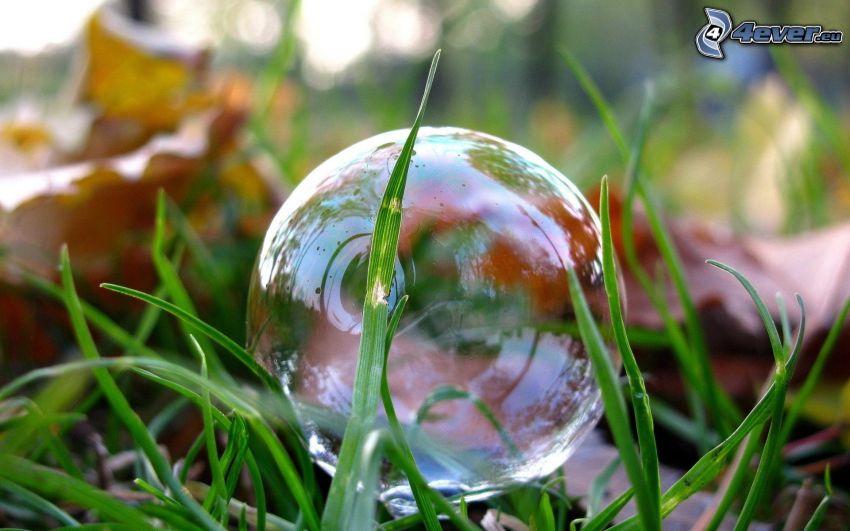 burbuja, hierba