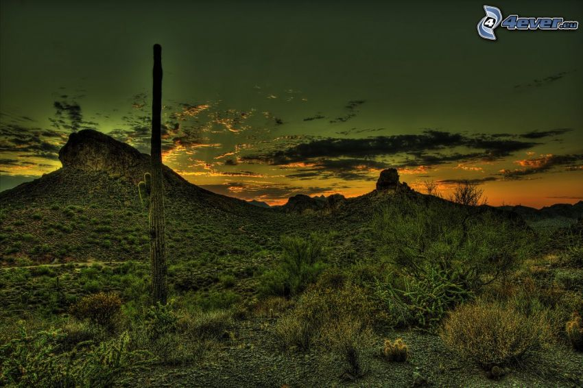 cactus, colina, después de la puesta del sol