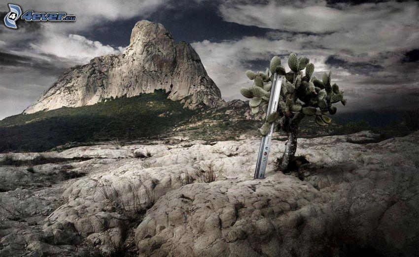 cactus, rocas, nubes