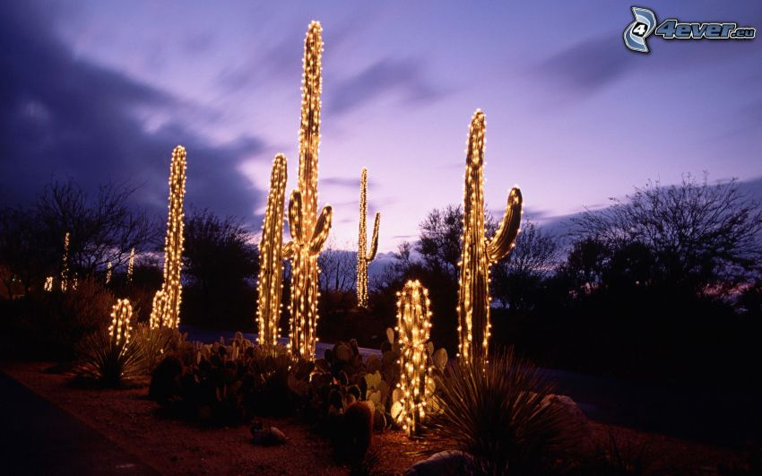 cactuses, luces, atardecer