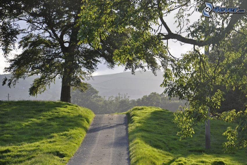 camino, árboles, prado