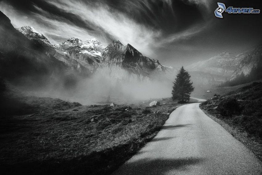 camino, conífera, montañas nevadas, montaña rocosa, blanco y negro