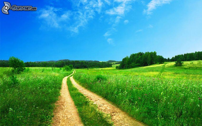 camino de campo, bosques y praderas, HDR
