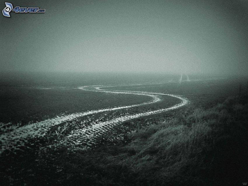 camino de campo, campo, niebla