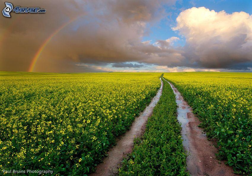 camino de campo, campo, nubes, arco iris