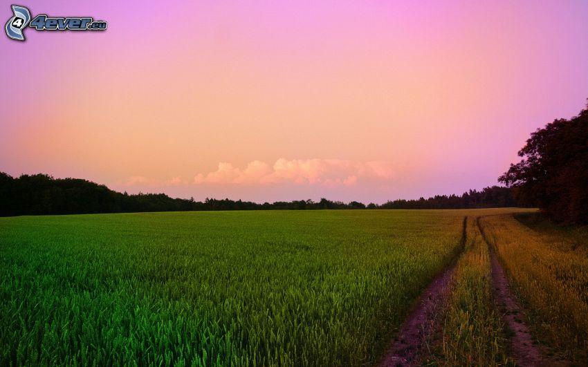 camino de campo, cielo púrpura, atardecer
