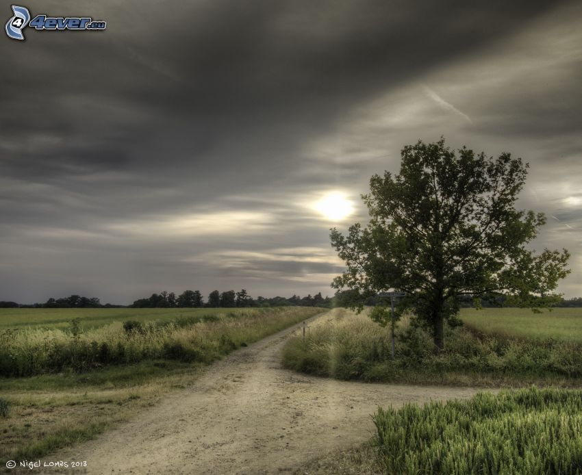 camino de campo, encrucijada, árbol, el sol detrás de los nubes