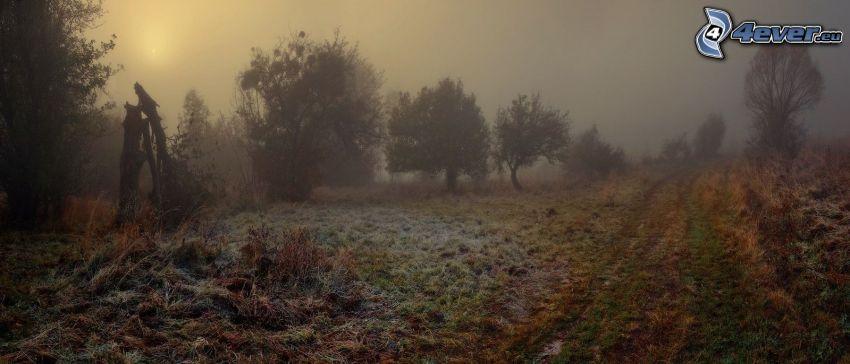 camino de campo, glaseado, sol débil, niebla