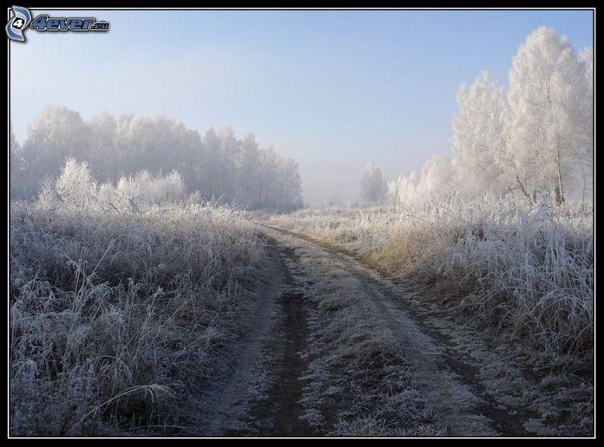 camino de campo, glaseado
