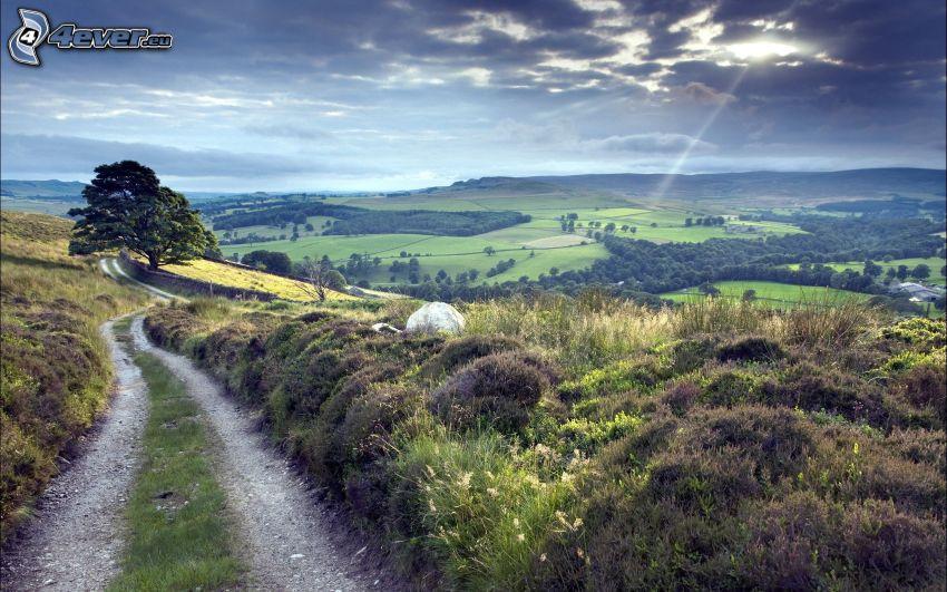 camino de campo, vista del paisaje, árbol ramificado