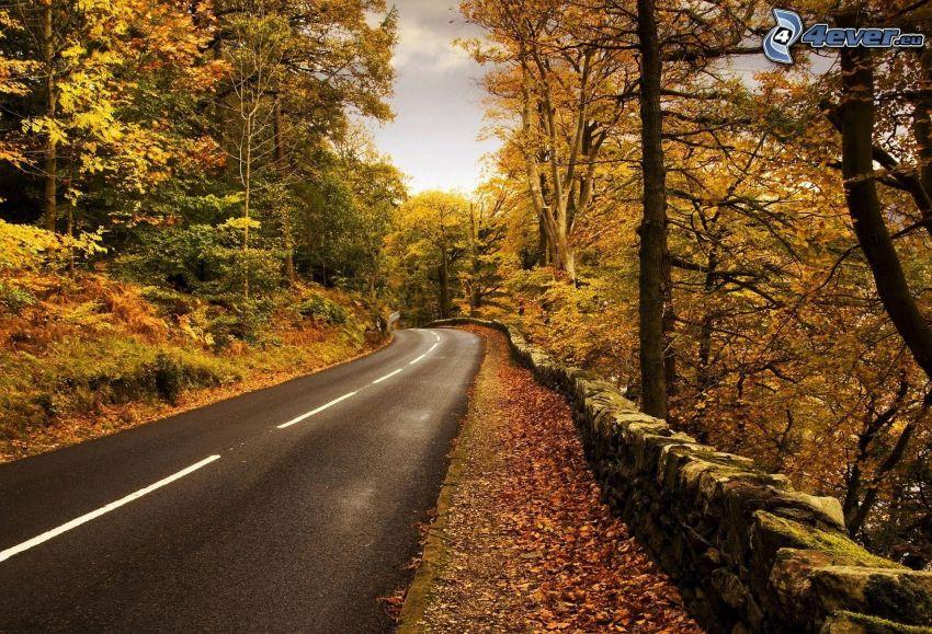 camino por el bosque, árboles amarillos, muro de piedra