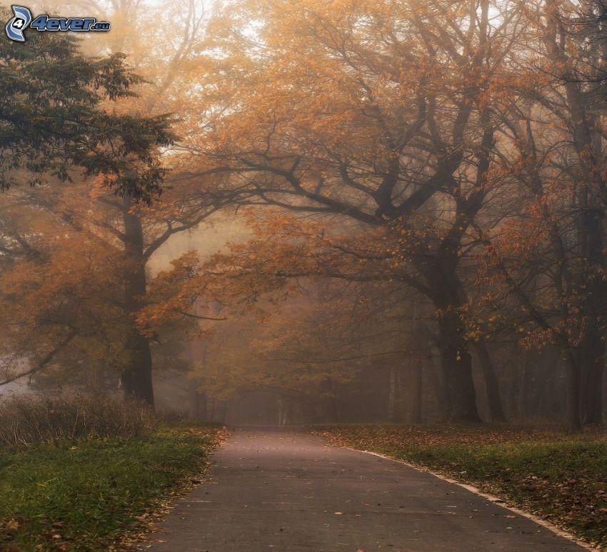 camino por el bosque, árboles amarillos, niebla en el bosque