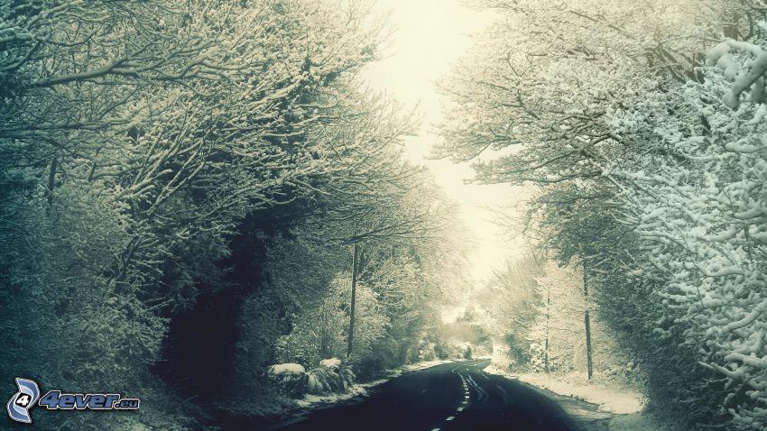 camino por el bosque, árboles nevados