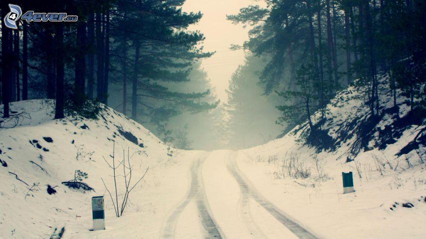 camino por el bosque, camino cubierto de nieve, bosque