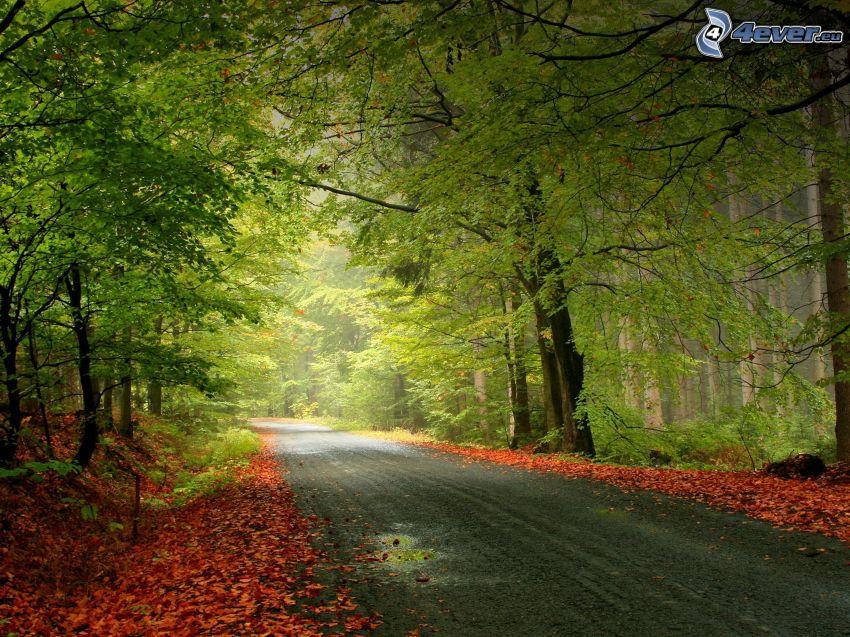 camino por el bosque, hojas rojas