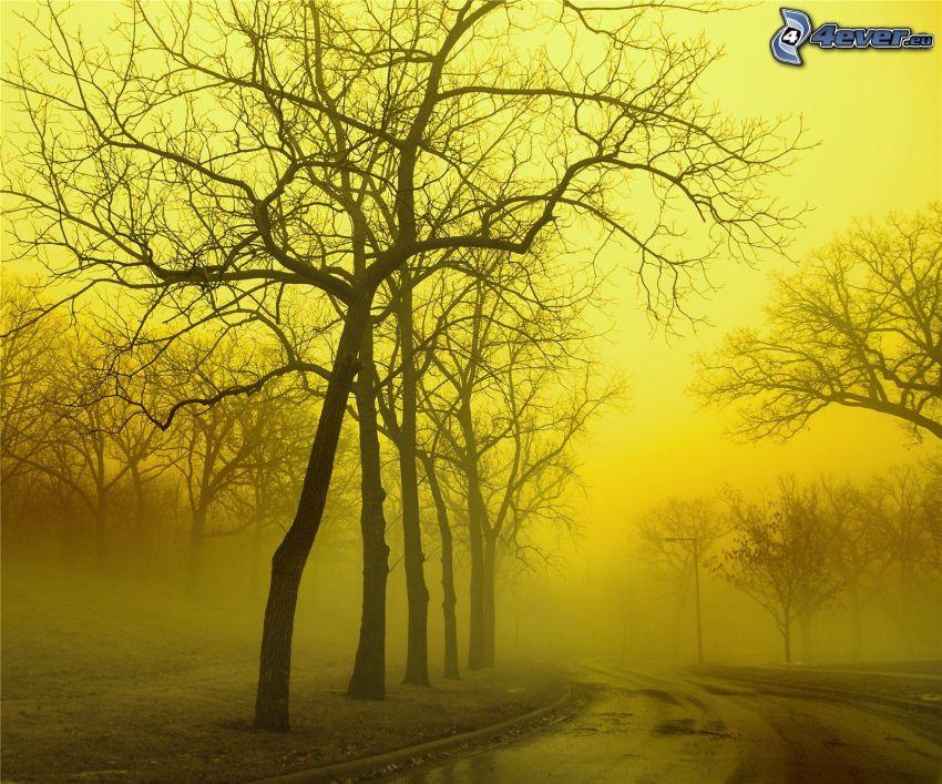 camino por el bosque, niebla, árbol deshojado, cielo amarillo
