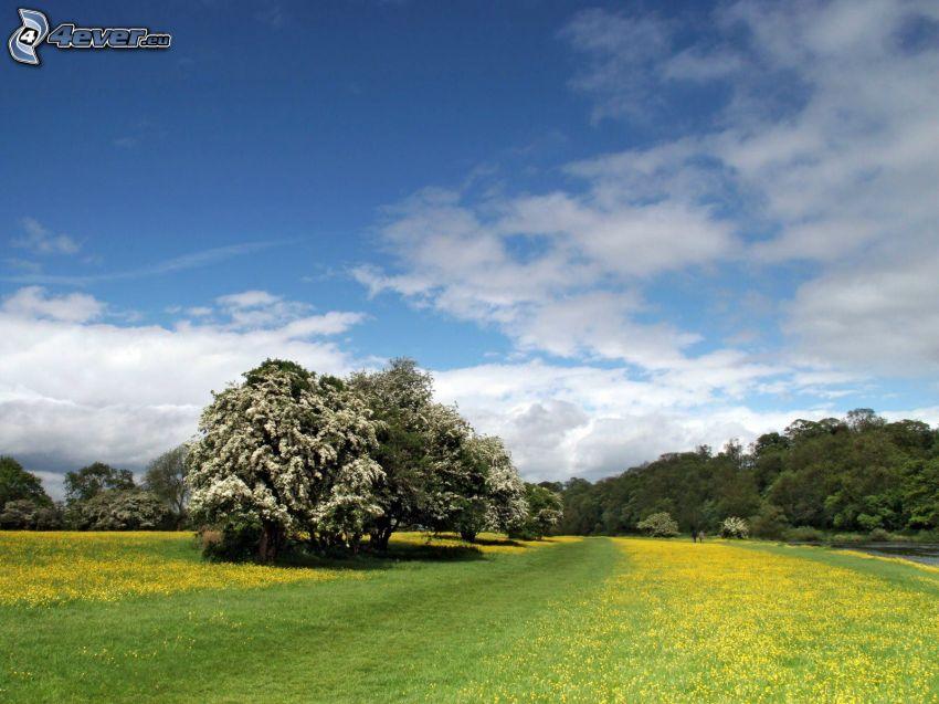 campo, árboles, nubes