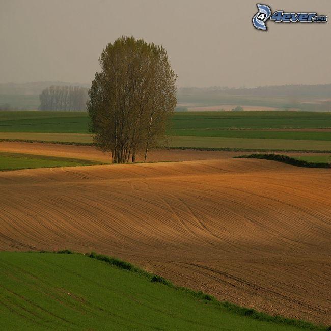 campo, árboles