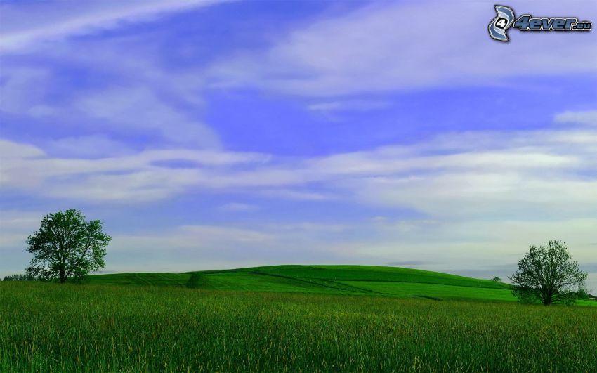 campo, árboles solitarios