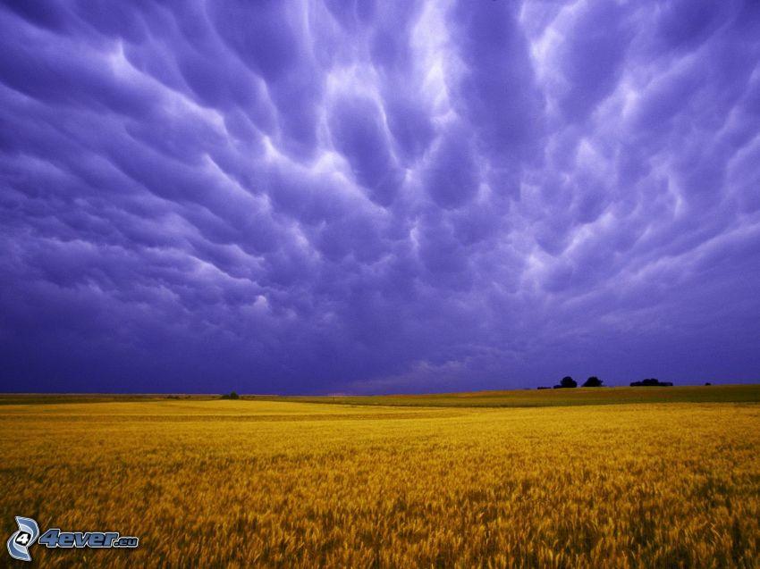 campo, cielo púrpura, nubes