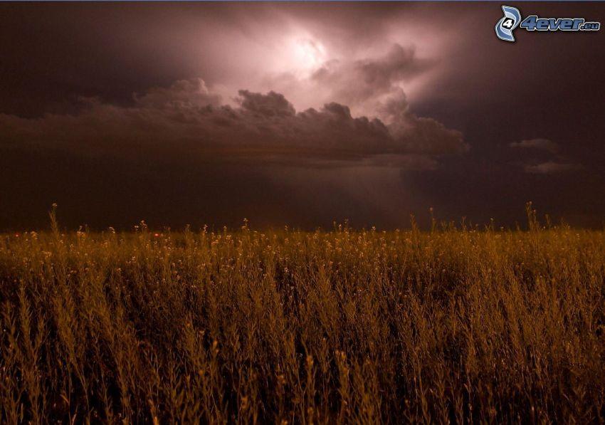 campo, colza de aceite, nubes