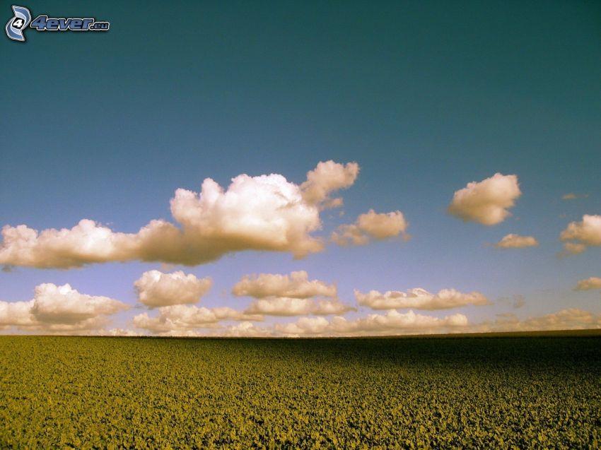 campo, nubes