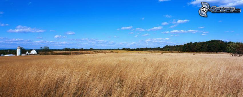 campo, panorama
