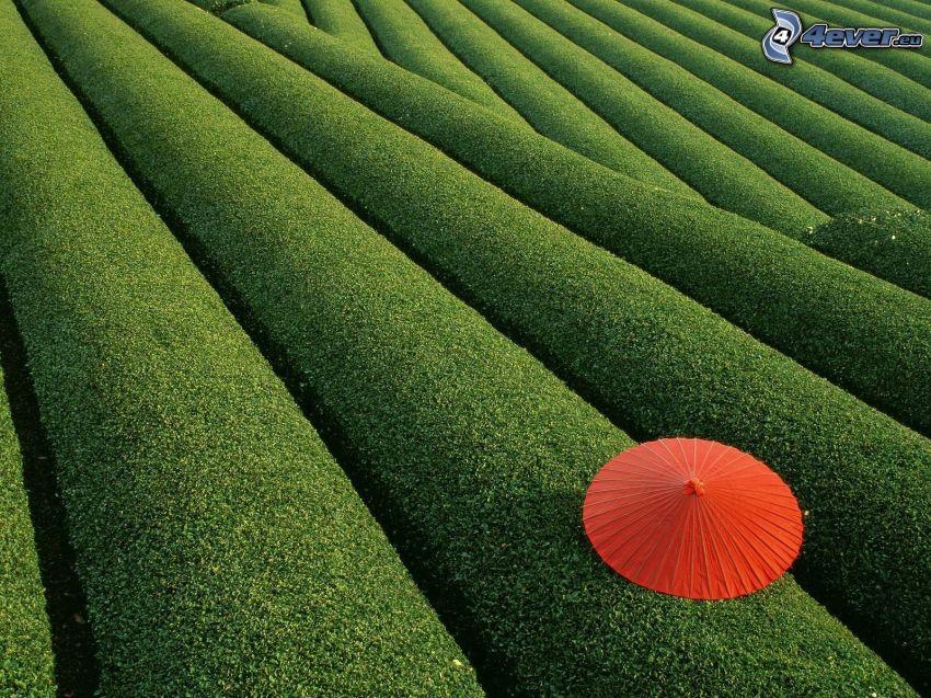 campo, paraguas