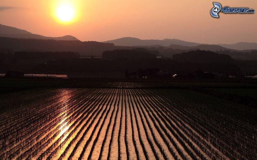 campo, puesta del sol